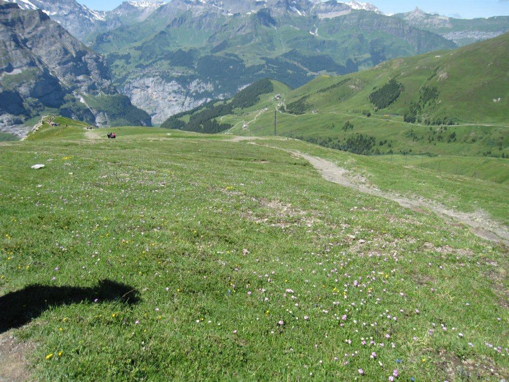 Swisswalk