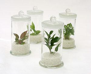 Bottleplants